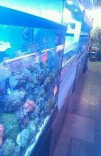 Photos For Yo Aquarium Yelp