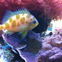 The Aquarium Showroom Closed Aquariums San Jose Ca