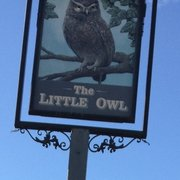 Little Owl, Birmingham, West Midlands, UK