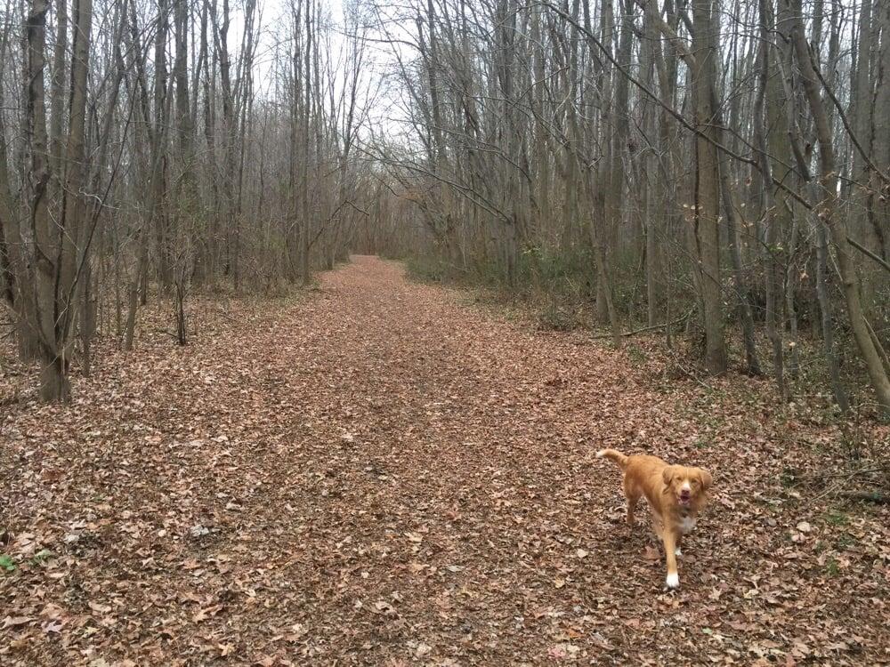 Mt Laurel Dog Park Al