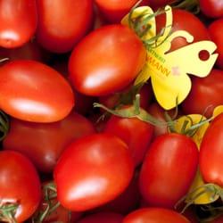 Alle acht Tomatensorten der Gärtnerei,…