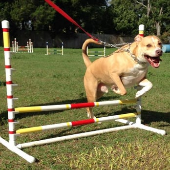 Natural Instinct Dog Training Apopka