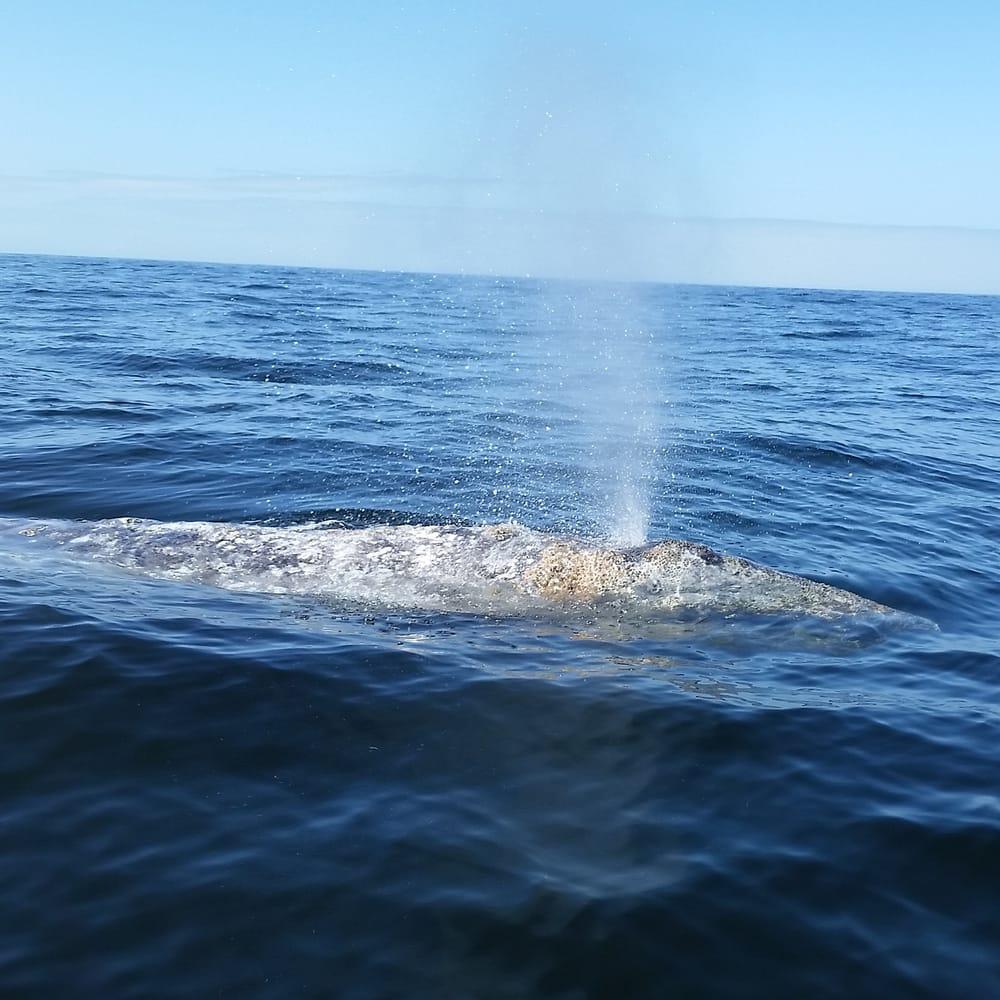 Dockside charters 14 photos boating 270 coast guard for Depoe bay fishing charters