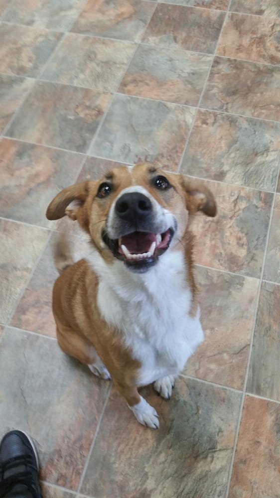 Dog daycare and boarding in Colorado | Yelp