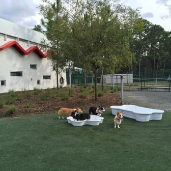 Best friends pet care 54 photos kennels pet sitting for Dog kennels near disney world