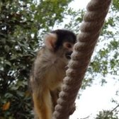 Monkey on a rope just above my head...