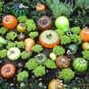 glass blown pumpkins and squash