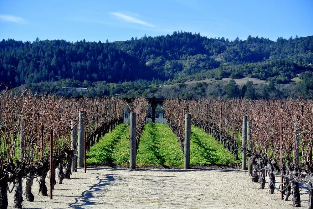 Photos for Robert Mondavi Winery | Yelp