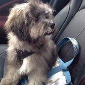 Dog Grooming Pembroke Ma