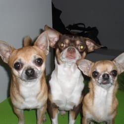 Dogs Place - Die Betreuung speziell für kleine Hunde, Cologne, Nordrhein-Westfalen, Germany