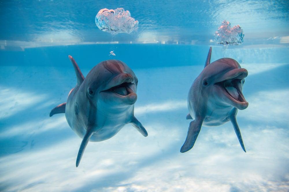 Corpus Christi (TX) United States  city photo : State Aquarium 212 Photos Aquariums Corpus Christi, TX, United ...