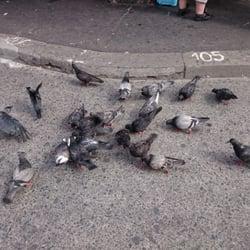 Gołębie też lubią zapiekanki;-)