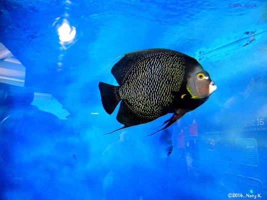 Mote Marine Laboratory Aquarium Venues Event Spaces