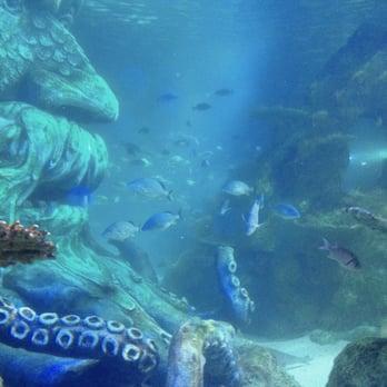 Sea Life Charlotte Concord Aquarium 112 Photos 51