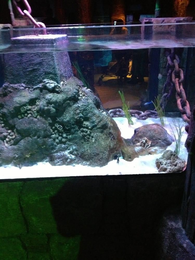 Sea Life Aquarium Aquariums Grapevine Tx Yelp