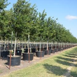 Hope Valley Tree Farm Tree Services Bastrop Tx