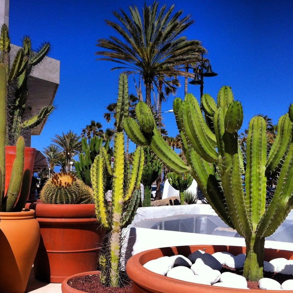 H10 conquistador hotels playa de las americas santa - The conquistador tenerife ...