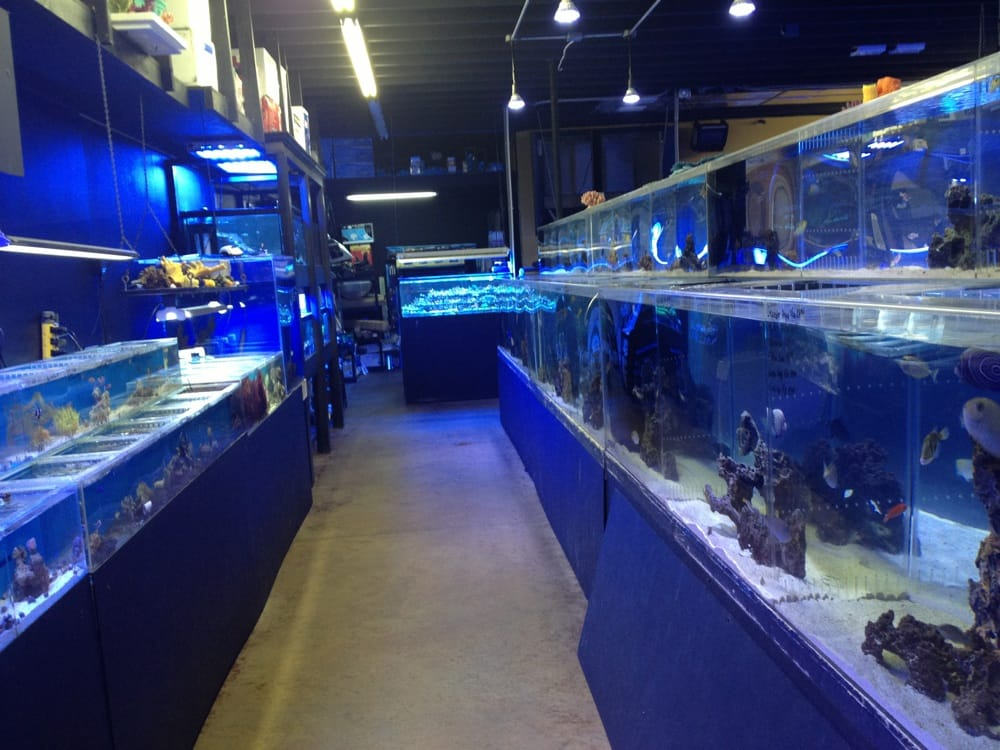Bio Reef Llc Aquarium Services Southside