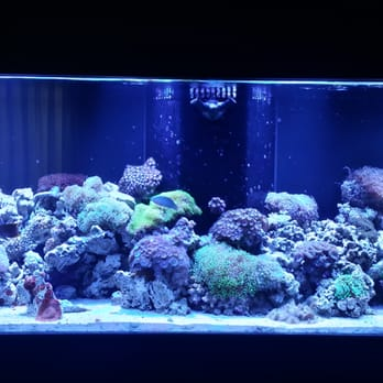 Oceans Aquarium 63 Photos Aquarium Services