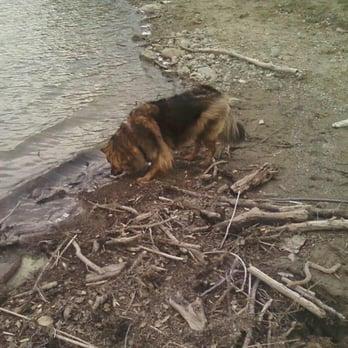 Del Valle Regional Park Dog Friendly