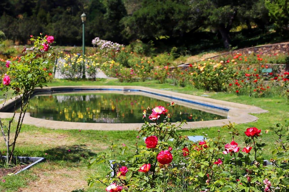 Morcom Municipal Rose Garden 222 Photos Parks Grand Lake Oakland Ca Reviews Yelp