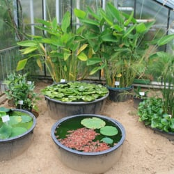 Wasserpflanzen mit Lotus-Effekt