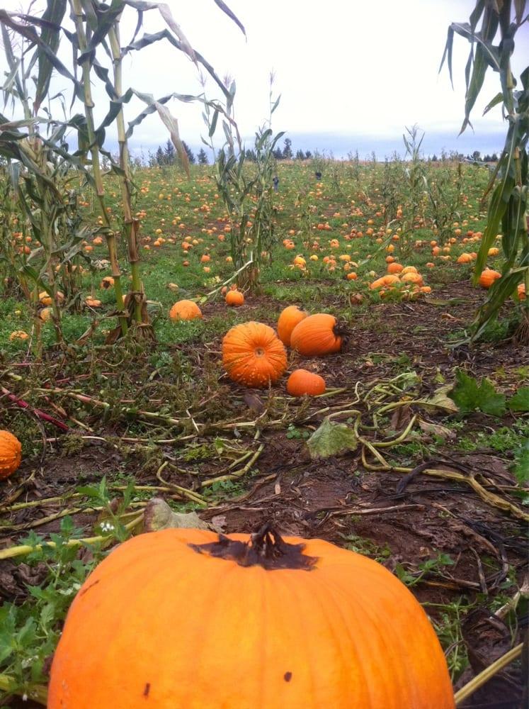 16 Pumpkin Patch Vancouver Wa 100 Free Pumpkin