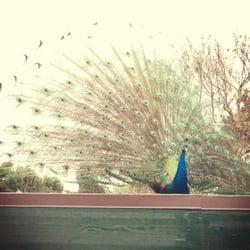 Los Angeles County Arboretum And Botanic Garden Arcadia Ca Verenigde Staten Yelp