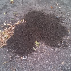 Smith's Gopher Trapping Service - San Jose, CA, États-Unis. Classic gopher pile with fan shape