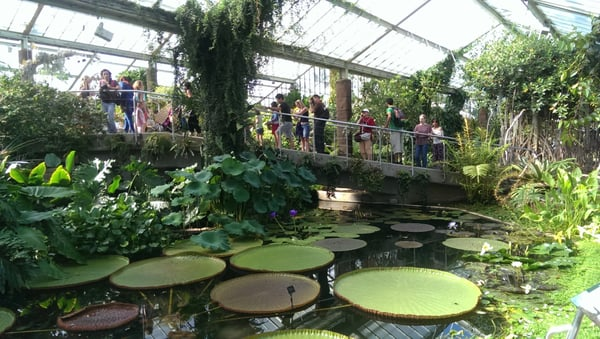 The Princess of Wales Conservatory recreates ten climatic zones. See orchids from Central America and lily pads from the Amazon.