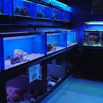 Fish tank maintenance service old saltwater aquarium for How to clean an old fish tank