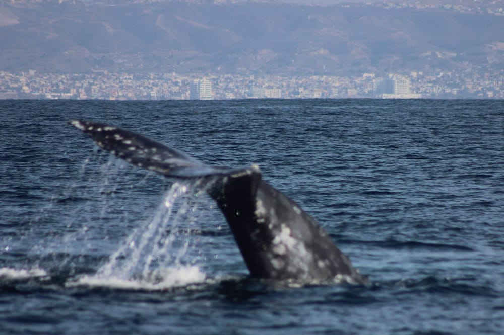 Adventure Rib Rides 55 Photos Boat Charters San Diego Ca United States Reviews Yelp