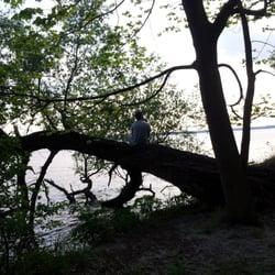 Ein Mann sitzt im Baum