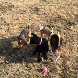 Shaughnessy Off Leash Dog Park
