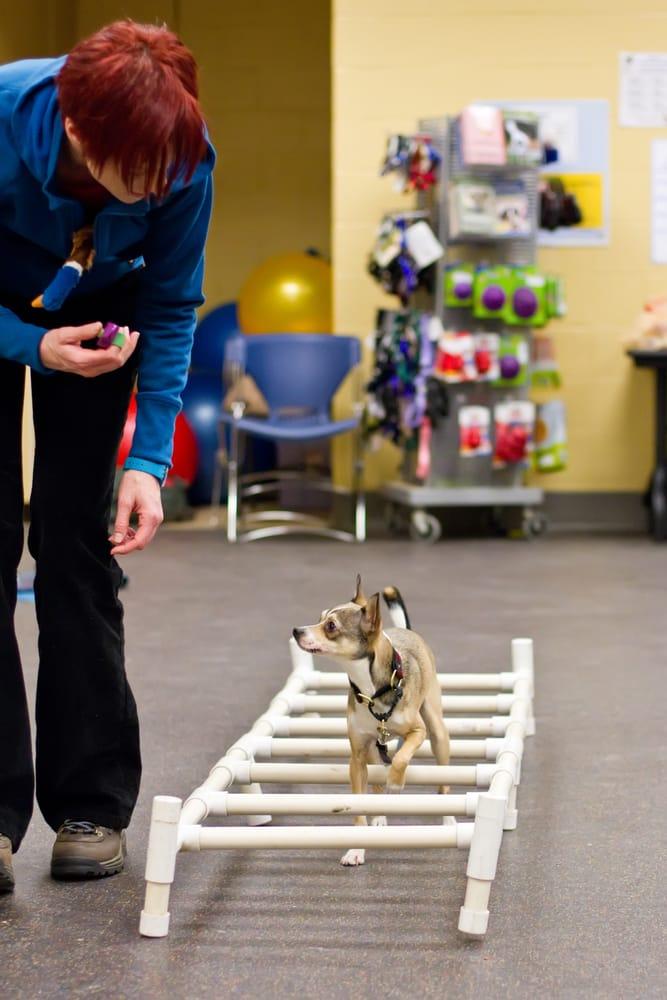 Mspca Dog Training Reviews