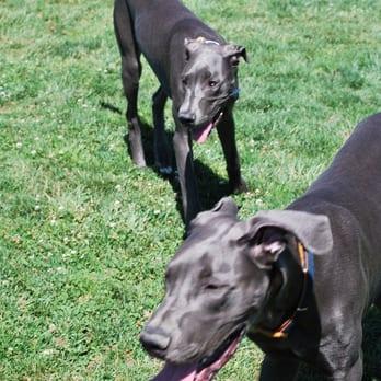 Wardlaw Dog Park