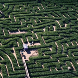 Tulleys Farm & Maize Maze, Crawley, West Sussex