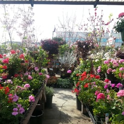 San Gabriel Nursery Amp Florist Nurseries Amp Gardening