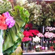 Autour d'une fleur, Paris, France