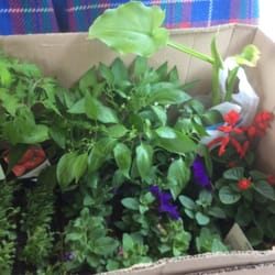 Box of plants.
