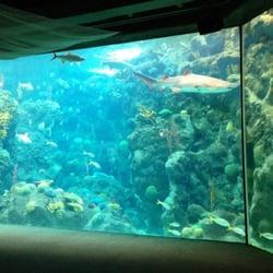 The Florida Aquarium Tampa Fl United States