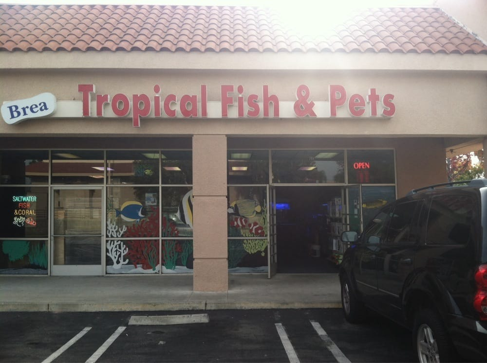 Brea s tropical fish and pets 20 photos pet stores for Pet stores that sell fish
