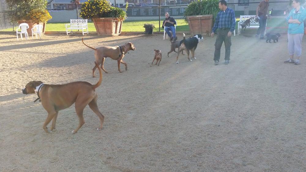Collingwood Dog Park