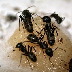 Pest control Northridge ca  dans Pest Control ls