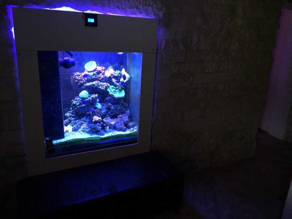 Saltwater fish tank near me 300gal saltwater fish tank for Fish store austin