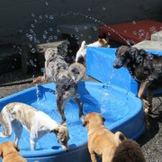 The Doghouse - Bubbles? Splashy pool? Never mind my dog, can I go to doggy daycare? - Vancouver, BC, Kanada