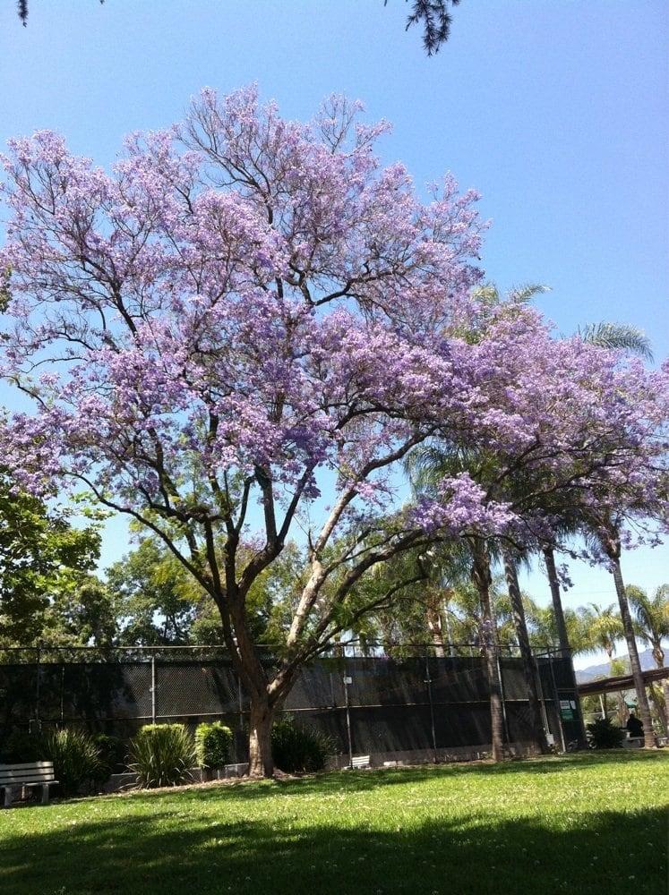 Eaton Blanche Park