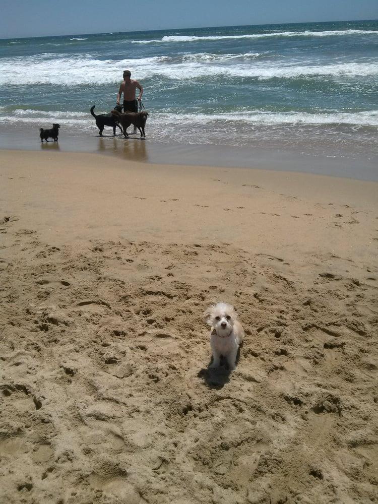 Dog Walking Services In Huntington Beach