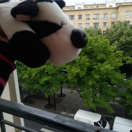 Winston the cow loved his view from the third floor!