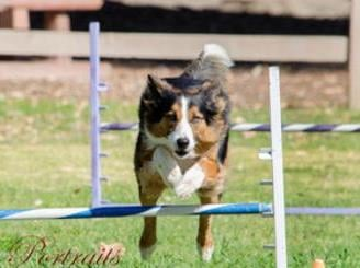 Dog Agility Training Santa Clarita